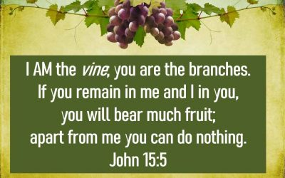 I AM The Vine and You are the Branches